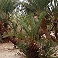 Desert Oase Camp Sinai Egypt by Colette V Hera  Guggenheim