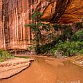 Desert Oasis - Coyote Gulch - Utah by Gary Whitton