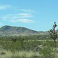 Desert Panoramic by Kay Novy