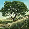 Desert Pine by Angeles M Pomata