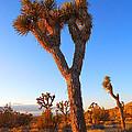 Desert Poet by Gem S Visionary
