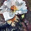 Desert Prickly Poppy by CJ  Rider
