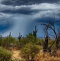Desert Rains  by Saija  Lehtonen