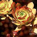 Desert Roses by Ellen Cotton
