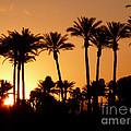 Desert Silhouette Sunrise by Deborah Smolinske