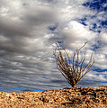 Desert Skys Number One by Jeremy McKay