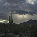 Desert Storm Beauty by Lorraine Harrington