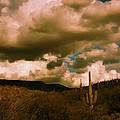 Desert Storm by L L Stewart