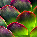 Desert Succulent In Bright Sun And Shade by Elaine Plesser
