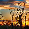 Desert Sunset by Fred Larson