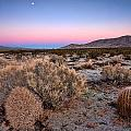 Desert Twilight by Peter Tellone