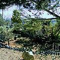Desert Vegetation Of Arizona by Stanley Morganstein