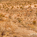 Desert Vista by Deborah Smolinske