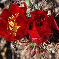 Desert Wildflowers by Diane Lent