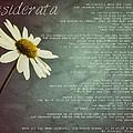 Desiderata With Daisy by Marianna Mills