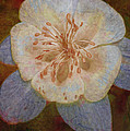 Designer Floral by Deborah Benoit