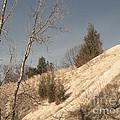 Desolate For A Season by Ann Horn