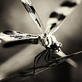 Determined Dragonfly by Heather Fox