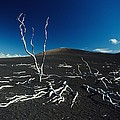 Devastation Trail by Ali ONeal - Printscapes
