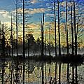 Devils Den In The Pine Barrens by Louis Dallara