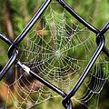 Dew Drop In  by Jo-Anne Gazo-McKim