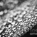 Dew Drops On Leaf Edge by Elena Elisseeva