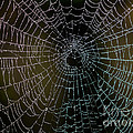 Dew Drops On Spider Web 5 by Tracy Knauer