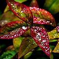 Dew On Autumn Leaves by Mick Anderson