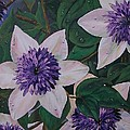 Clematis After The Rain by Sharon Duguay