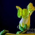 Dew On The Dragon by Mitch Shindelbower