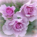 Dew On The Roses by Phyllis Beiser