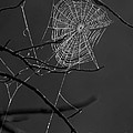 Dew Web-signed-#3322 by J L Woody Wooden