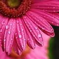 Dewdrop Daisy by Tia Patton