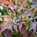Dewdrops by Kathryn Meyer