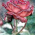 Dewey Rose by Bonnie Willis