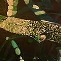 Dewy Blade by Frank Troy