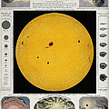 Diagram Of The Sun With Sunspots C by Wellcome Images