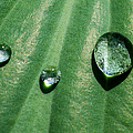 Diamonds Are Forever - Featured 3 by Alexander Senin