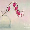 Dicentra In A Glass Vase 2 by Ann Garrett