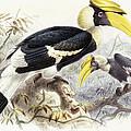 Dichocerus Bicornis by Johan Gerard Keulemans