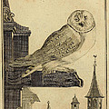 Die Schleyer Eule by Philip Ralley