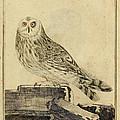 Die Stein Eule Or Church Owl by Philip Ralley