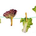Dieting Concept by Luis Alvarenga
