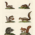 Different Kinds Of Squirrels by Splendid Art Prints