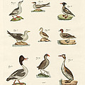 Different Kinds Of Waterbirds by Splendid Art Prints
