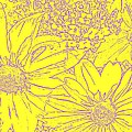 Digital Cone Flowers Drawing by Chris Berry