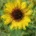 Digital Painting Series Sunflower by Cathy Anderson