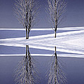 Digitally Manipulated Image Of Two Trees In The Middle Of Winter by Don Landwehrle