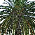 Digitized Cali Palm  by DeAnna Denise Adams