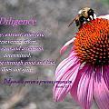 Diligence by Kim Blaylock